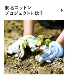 What is Tohoku Cotton Project